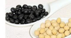 マメ科ダイズの種子。写真は黒大豆と黄大豆