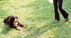 【ボランティア】飼えなくてもシニアが『犬との暮らし』を始める方法