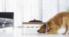 老犬の基礎知識 安心して暮らすコツと飼い主の心構えとは
