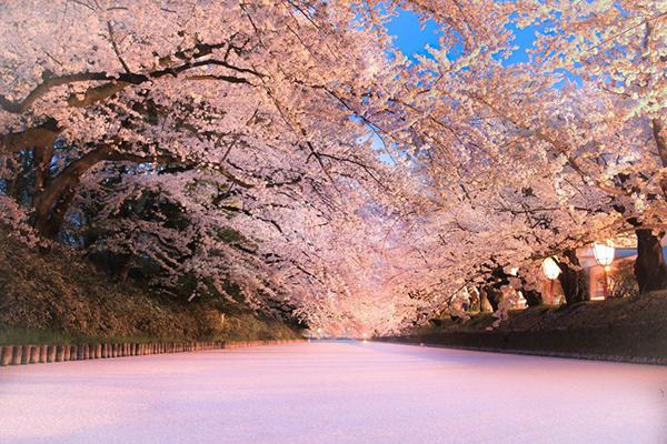 弘前公園のさくらオーナーをふるさと納税で募集! オーナー証や限定体験イベントへの招待特典付き
