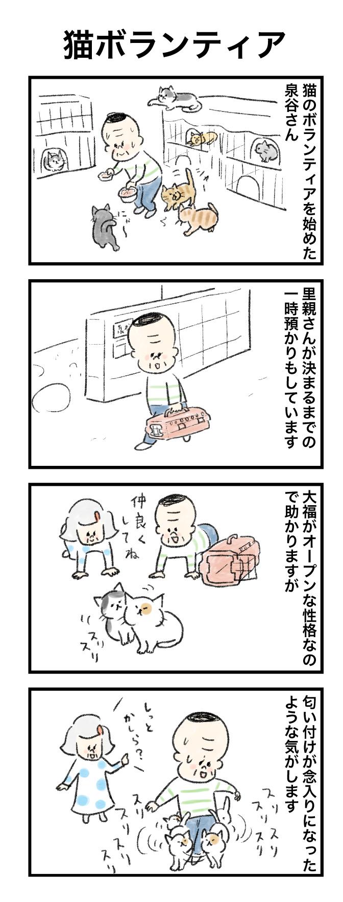今日の泉谷さん【34】 作:カワサキヒロシ「猫ボランティア」