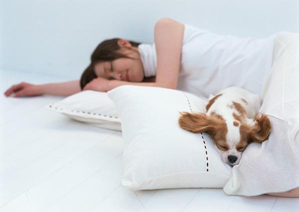 ペットと昼寝