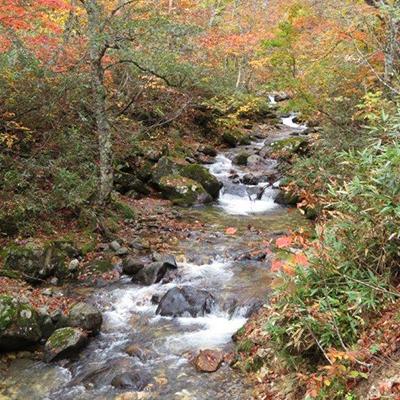 奥入瀬渓谷を思わせる、冬路沢「尾瀬を歩く 案内人のつぶやき」OKKOが伝える尾瀬の魅力