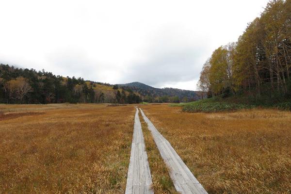 大江湿原「尾瀬を歩く 案内人のつぶやき」OKKOが伝える尾瀬の魅力