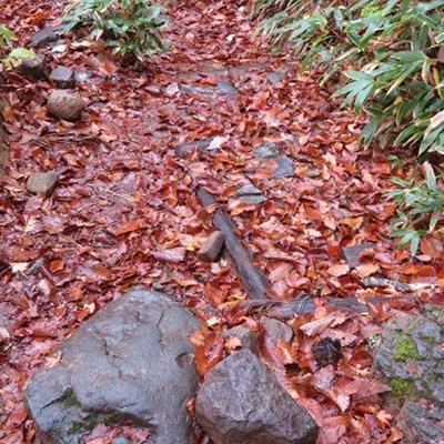 登山道には落ち葉の絨毯「尾瀬を歩く 案内人のつぶやき」OKKOが伝える尾瀬の魅力