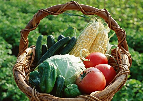 自宅外で家庭菜園 アグリメディアが運営する「シェア畑」