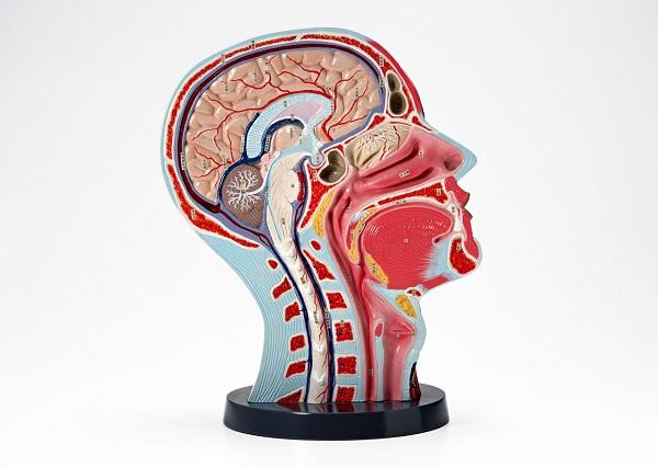 こめかみ、おでこ、頭の後ろ、頭痛の位置で原因に差はある?頭痛が長く続く場合は素早く病院の専門外来へ!