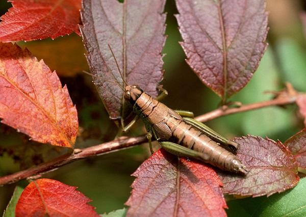未来は昆虫食が普通に?アマゾンが世界を救う!食用昆虫はどんなものがある?