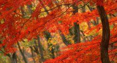 「秋バテ」は「夏バテ」ち違う?どんな症状?自律神経が乱れる秋バテの基本情報をチェック