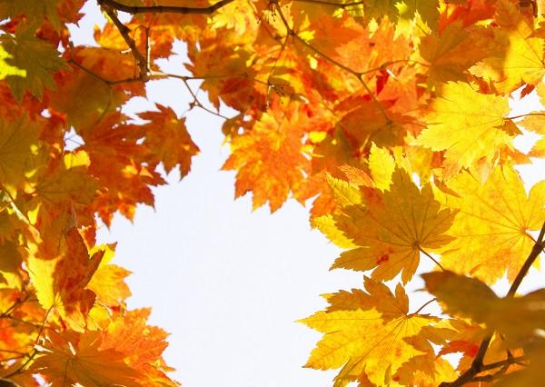 夏から秋、秋から冬など季節の代わり目は具体的にいつなの?