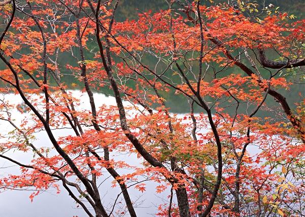 秋といえば紅葉!日帰りもOK、宿泊もOK。楽しみ方がいろいろあるお勧めスポットを調査